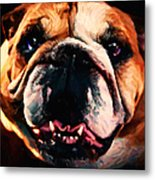 English Bulldog - Painterly Metal Print