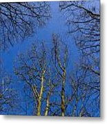 English Forest Trees Metal Print