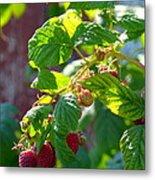 English Raspberries Metal Print