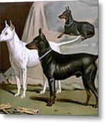 English Terriers Metal Print