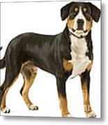 Entlebuch Mountain Dog Metal Print