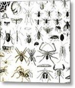 Entomology Myriapoda And Arachnida  Metal Print