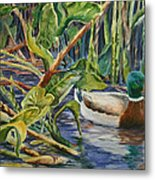Environmentally Sound - Mallard Duck Metal Print