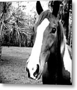 Equine Beauty Metal Print by Chasity Johnson