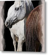 Equine Horse Head And Tail Metal Print by Daniel Hagerman