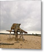 Eroded Tree Stumps Stand On Their Roots Metal Print