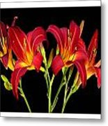 Erotic Red Flower Selection Romantic Lovely Valentine's Day Print Metal Print