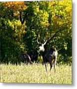 Escape Into The Trees Metal Print