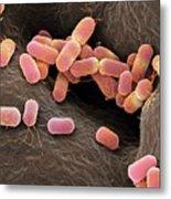 Escherichia Coli Bacteria Metal Print