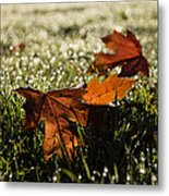 Essence Of Autumn Metal Print