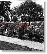 Esther Short Park Rose Garden Metal Print