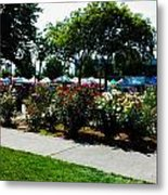 Esther Short Park Rose Gardens Metal Print