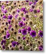 Eternity Flower Metal Print by Gerald Murray Photography