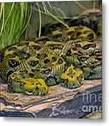 Ethiopian Mountain Vipers Metal Print