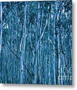 Eucalyptus Forest Metal Print by Frank Tschakert