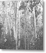 Eucalyptus Forest Metal Print
