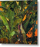 Eugene And Evans' Banana Tree Metal Print