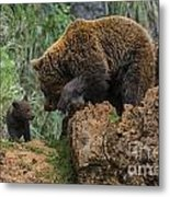 Eurasian Brown Bear 13 Metal Print