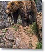 Eurasian Brown Bear 15 Metal Print