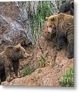 Eurasian Brown Bear 17 Metal Print