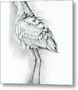 Eurasian Spoonbill - Platalealeucorodia Metal Print