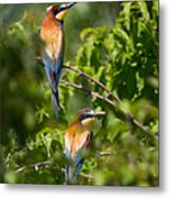 European Bee-eater Metal Print