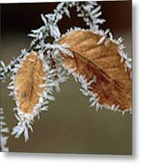 European Beech Leaves With Frost Metal Print