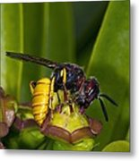 European Beewolf Metal Print by Science Photo Library