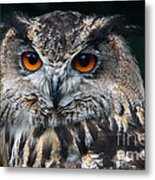 European Eagle Owl  Metal Print