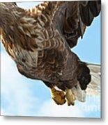European Flying Sea Eagle 2 Metal Print