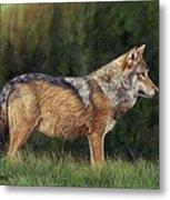 European Grey Wolf Metal Print