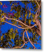 Evening Blues Metal Print