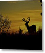 Evening Buck Metal Print