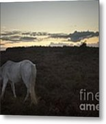 Evening In New Forest Metal Print