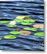Evening Lake With Water Lily Metal Print