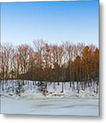 Evening Light On The Trees Metal Print