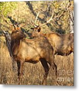 Evening Sets On The Elk Metal Print