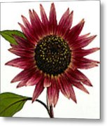 Evening Sun Sunflower 2 Metal Print
