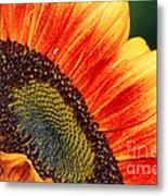 Evening Sun Sunflower Metal Print
