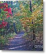 Evening Walk Thru The Woods Metal Print