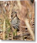 Ever Attentive Metal Print