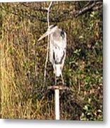 Ever Watchful Blue Heron Metal Print