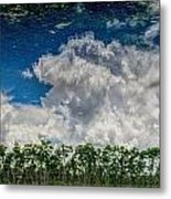 Reflected Everglades 0203 Metal Print