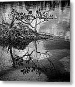 Everglades 0346 Metal Print