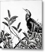Everglades 20 Metal Print