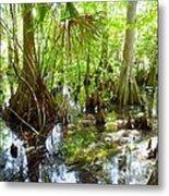 Everglades Metal Print