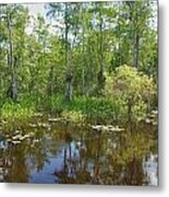 Everglades Lake Metal Print