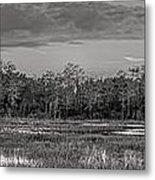 Everglades Panorama Bw Metal Print