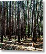 Evergreen Forest Metal Print