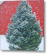 Evergreen In Winter 2 Metal Print
